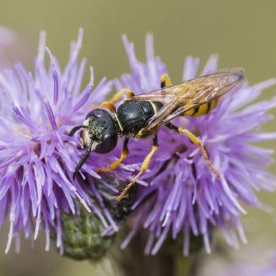 Insektenbestimmungsschlüssel 1